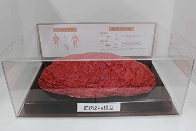 くモスクゴージャス筋肉模型 フィギアケース入 2kg ダイエット 健康 肥満 トレーニング フードモデル 食品サンプル