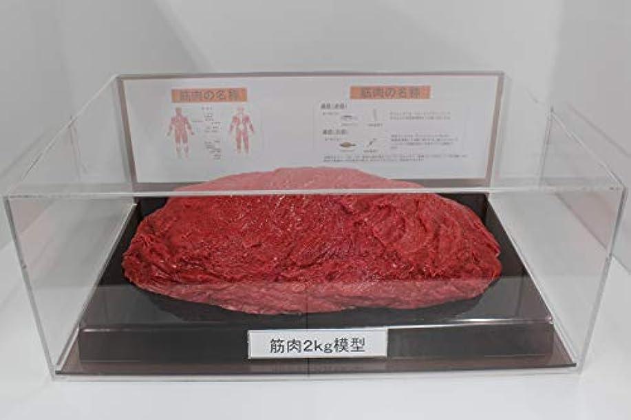 偽物傭兵請求筋肉模型 フィギアケース入 2kg ダイエット 健康 肥満 トレーニング フードモデル 食品サンプル