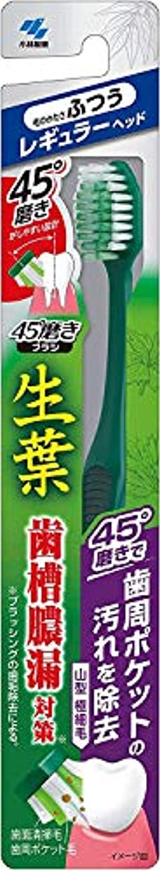 エンティティ無法者六月小林製薬 生葉45°磨きブラシ 歯周ポケットの汚れを除去 レギュラー ふつう