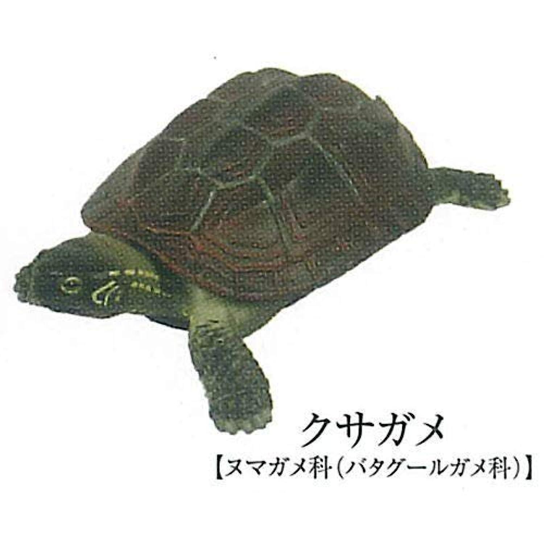 立体カプセル百科事典 原色爬虫類カメ目図鑑 [2.クサガメ](単品)