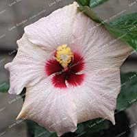 100個/袋ハイビスカスフラワー植物ハイビスカス植物盆栽フラワー中国のローズ植物MIX色家庭用植物を選択するガード:3