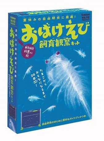 自由研究に最適「おばけえび飼育観察キット」生物の一生を楽しく観察 自由研究 小学生夏休み