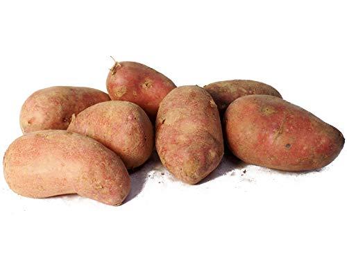 じゃがいも 種芋 タワラヨーデル 500g ジャガイモ