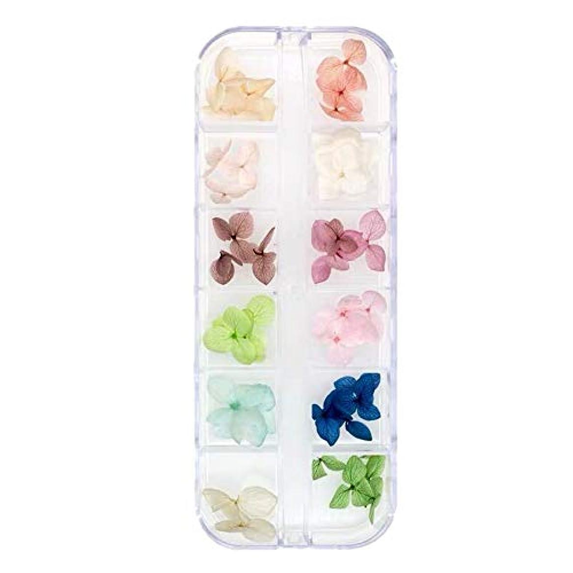 選択するタイトル純度Kingsie ドライフラワー ネイル 本物の押し花 紫陽花 ネイルパーツ 12色 ネイルアート アクセサリー ジェルネイルに埋め込み レジン封入 (2A)