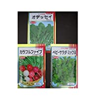 ほぼ周年で作れるサラダ向き野菜種セット サカタのタネの野菜種子 組み合わせセット