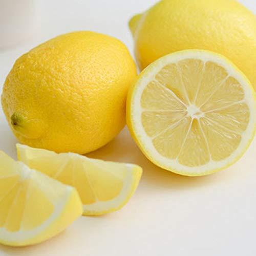 瀬戸内レモン 整品 5kg 国産レモン ハウス栽培 愛媛 岩城島 いわぎ島