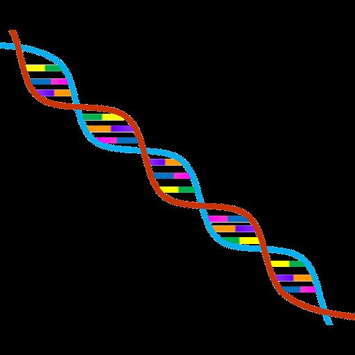 ヒト遺伝子