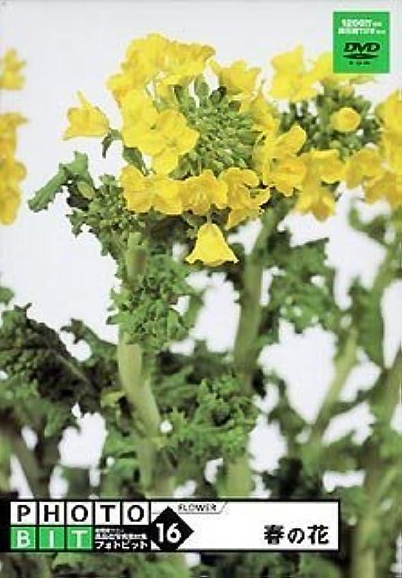 先住民神秘的なロープPhotobit 16 春の花