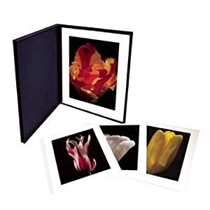 Tulipae Hortorum