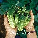 種子パッケージ: 果物や野菜の新品種の20口さわやかな種子 女性シードサラダ