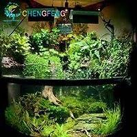 スワングリーンライトグリーン:プロモーション!200種12種類混合水族館の水槽草種子屋内の美しい時計水生植物種子