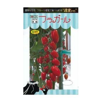 「フラガール」【ミニトマトの種】(8粒)