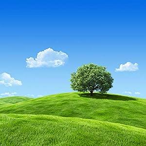 爱上大草原