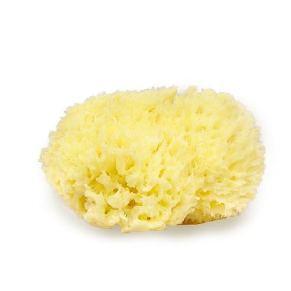 ルート断言する胃高品質シチリア産 天然海綿スポンジ ハニコム種M