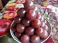 トマトChernaya Vishnyaの2グラム/ 40種子