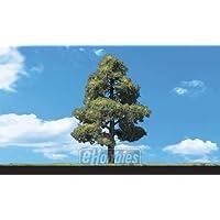 Classics Tree, Sun Kissed 6-7