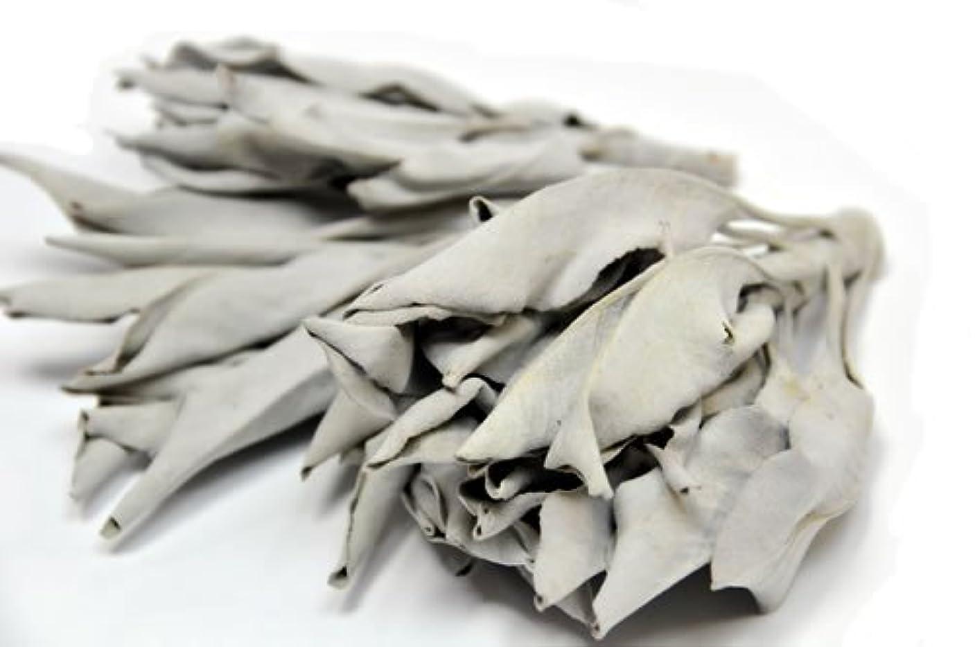 ブラウン原因餌ホワイトセージ100g プロ用 浄化上質クラスター カリフォルニア産 ワイルド野生種(wild)