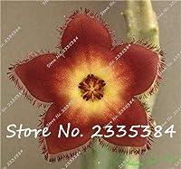 ホット販売120ピースリトープススタペリアプルケラ種子ミックス多肉植物生石サボテン種子ホーム&アンプ;ガーデンフラワー盆栽プラン