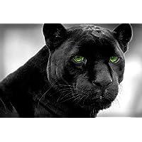 ブラックパンサー動物 - #15480 - キャンバス印刷アートポスター 写真 部屋インテリア絵画 ポスター 90cmx60cm