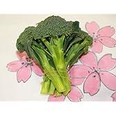 九州産の野菜 長崎県産 ブロッコリー 直売所販売用