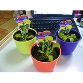 【夏の自由研究に】食虫植物・ハエトリ草3鉢セット