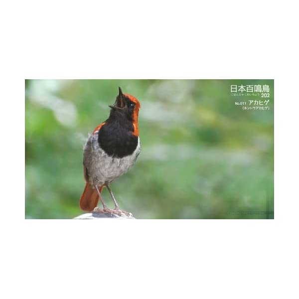 シンフォレストBlu-ray 日本百鳴鳥 20...の紹介画像3