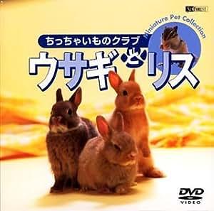 シンフォレストDVD ウサギとリス/ちっちゃいものクラブ