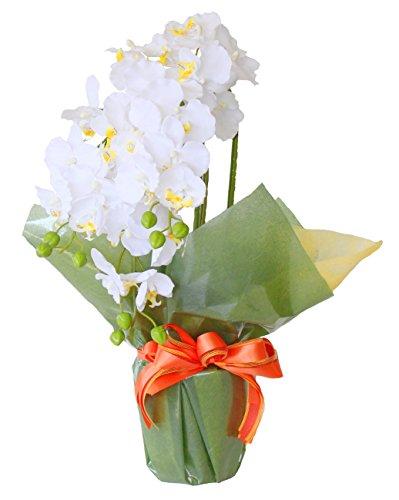 山久 優雅で高貴な 胡蝶蘭 鉢植 三本立 ホワイトイエロー ...