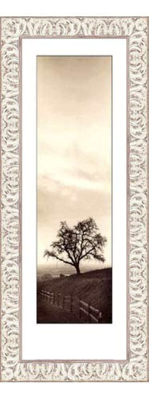 Sentinelオークツリーby Alan Blaustein – 9 x 24インチ – アートプリントポスター LE_193831-F9711-9x24