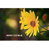 【言葉で伝える感謝ポストカードのAIR】「ありがとうございました」黄色い花フォトカードポストカードハガキはがき絵葉書postcard-