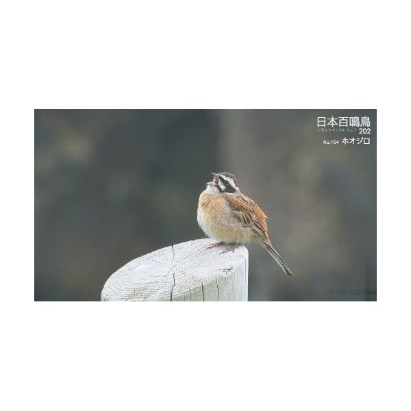 シンフォレストBlu-ray 日本百鳴鳥 2...の紹介画像25