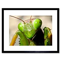 Praying Mantis Insect Green Close Up Picture Framed Wall Art Print 緑閉じる画像壁