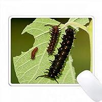 オランダ人PipevineのPipevine Swallowtailキャタピラ、Marion Co. IL PC Mouse Pad パソコン マウスパッド