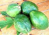 徳之島産から直送 露地栽培の青パパイヤ5kg