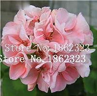 種子パッケージ:ホームガーデンのための盆栽種子のための100 PcsBonsaiレアVariegatedSeedウィンターガーデン:6