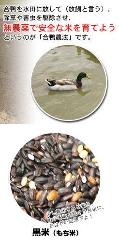 長崎県産 一支国 原の辻遺跡 合鴨農法無農薬 古代 黒米 5kg 壱岐
