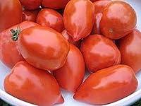 Fat Mama Tomato Seed