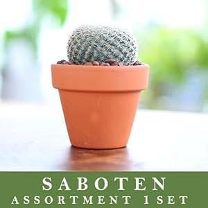 アソートサボテン 観葉植物 インテリア ギフト プレゼント 雑貨(アソート2号1個)