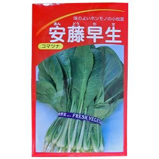 小松菜 種 【 安藤早生小松菜 】 種子 小袋(約10ml)