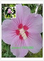 100個の種子ハーディ、ミックスカラー、DIYホームガーデンは、鉢植えや庭、:マルチカラー