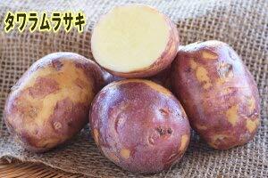 【種ジャガイモ・種いも】「タワラムラサキ」の種じゃがいも 約500g入【春ジャガイモ用12月下旬?2月中旬発送】