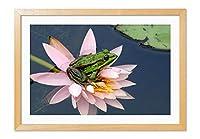 カエルとスイレン、ピンクの花 風景の写真 木製フレーム 額縁 壁掛け ホーム装飾画 装飾的な絵画 壁の装飾 ポスター(40x60cm 原色)