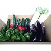 【農家とダイレクト】期間限定 宮崎県西都市産 わけあり野菜セット 春大根付き 収穫日に農家直送,超新鮮、九州