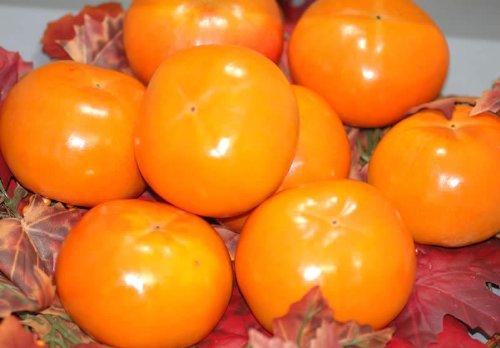 訳あり お買い得品富有柿 ご家庭用わけあり品(規格外品質) 約7.5kg 2L〜3L 25個前後入