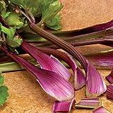 ポリフェノールを豊富に含む 紫セロリ 30粒 F1品種 新品種 有機認証品種