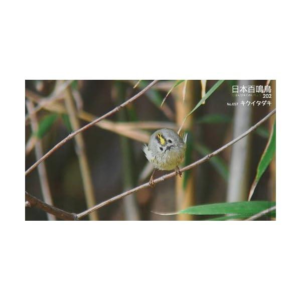 シンフォレストBlu-ray 日本百鳴鳥 2...の紹介画像14