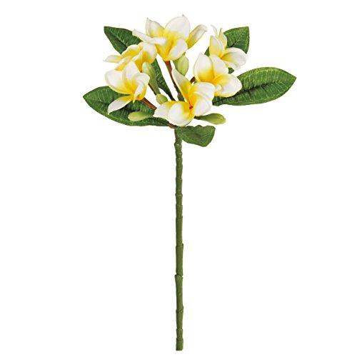 RoomClip商品情報 - MAGIQ 東京堂 上質な造花 パルティプルメリア クリームイエロー FM008264-001