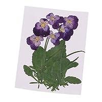 ドライフラワー 材料 バイオレット 乾燥花 押された花 工芸 DIYアートクラフト アクセサリー