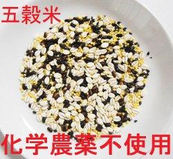 無農薬栽培 こだわり五穀米 2.8kg×2