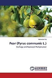 Pear (Pyrus Communis L.)